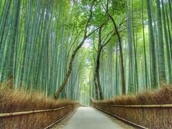 estrada bambus