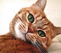 Offre de service : je prends soin de votre chat