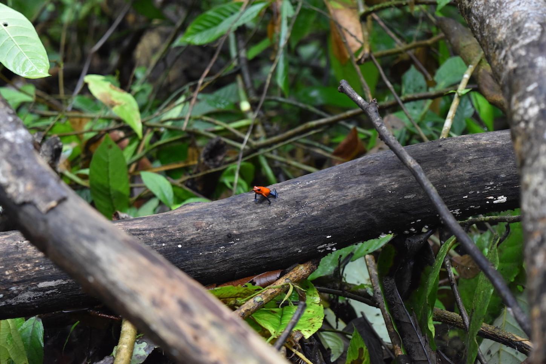 writer-blog-freelance-frogs-costa-rica.j