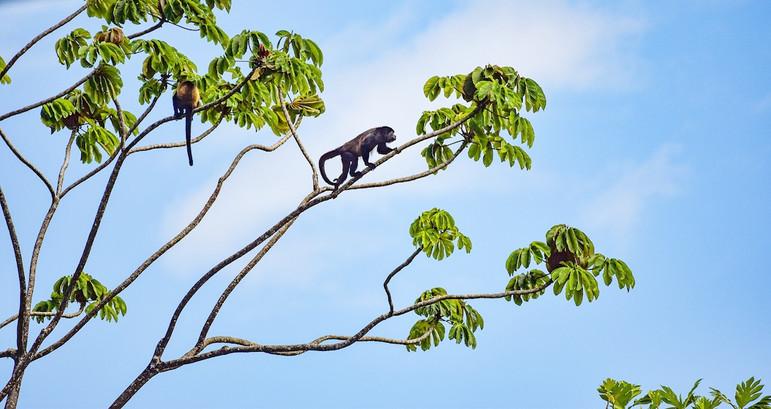 wildlife-photographer-panama-bocas-del-t
