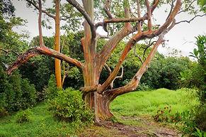 writer-travel-freelance-walk-in-woods.jp