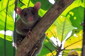 wildlife-writer-conservation-green-costa