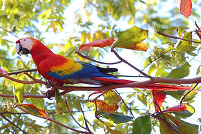 writer-nature-volunteer-costa-rica.jpg