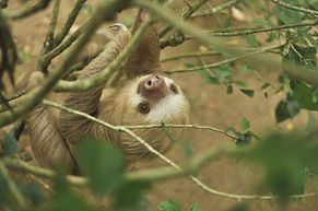 nature-writer-conservation-sloth-sanctua