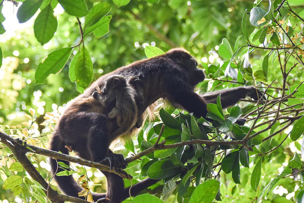 wildlife-photographer-panama-nature-writ