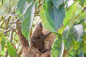 baby-sloth-panama-bocas-del-toro-writer-photographer.jpg
