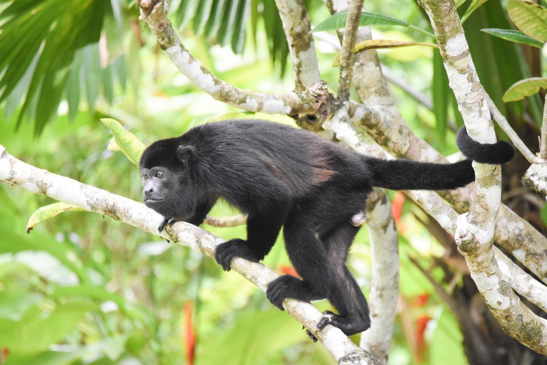 costa-rica-travel-nature-writer-conservation-photographer