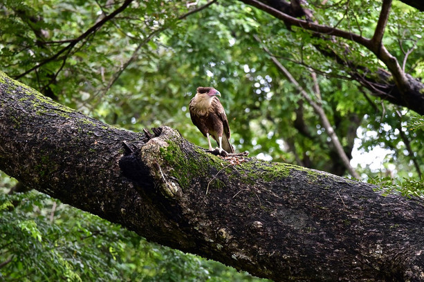 photographer-freelance-costa-rica-birds.