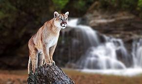 writer-wildlife-nature-costa-rica-corcov