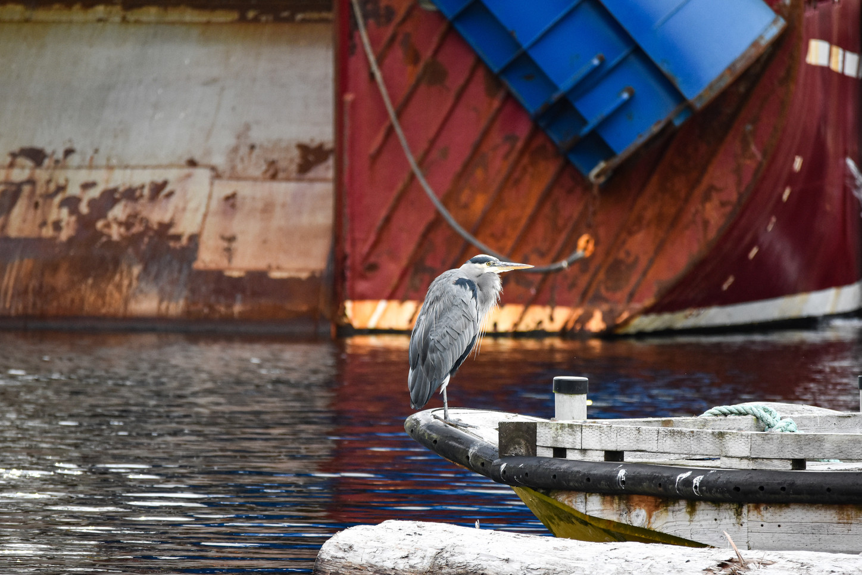 environmental-conservation-writer-photog