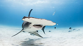 shark-conservation-writer-nature-photogr
