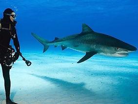 travel-writer-adventure-shark-diving-des