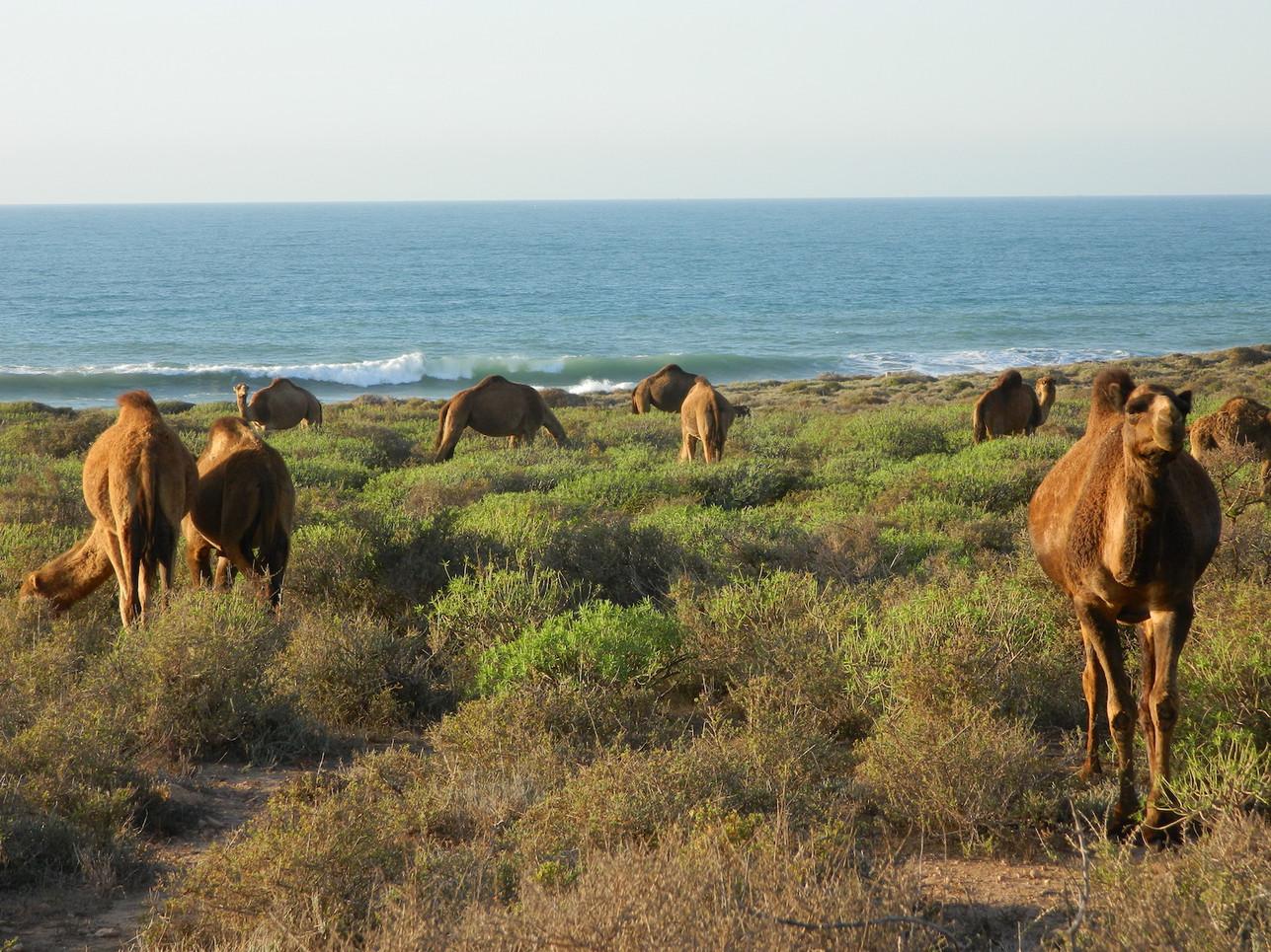 travel-desert-photography-morocco-writer
