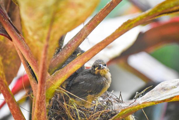 birder-bird-photography-tropical-island-