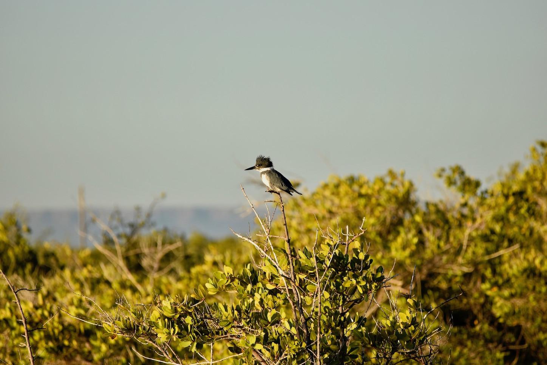 bird-watching-wildlife-photography-natur