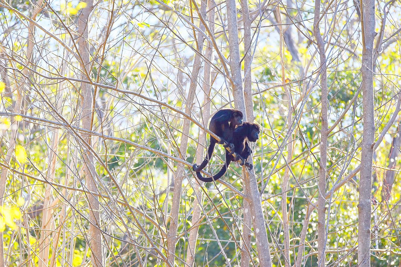 wildlife-costa-rica-photographer-writer-