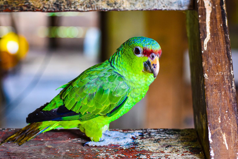 wildlife-nature-conservation-writer-phot