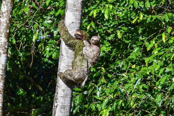 nature-wildlife-freelance-photographer-s