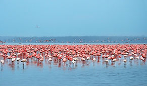 writer-nature-travel-wildlife-migrations