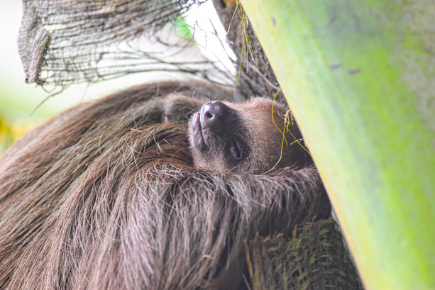 panama-central-america-wildlife-photogra