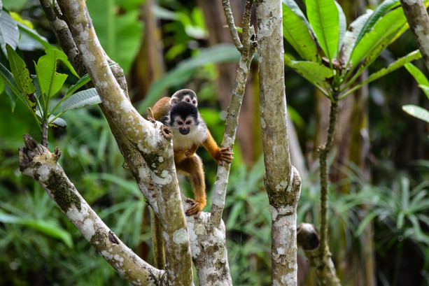 writer-photographer-nature-conservation-costa-rica-national-parks