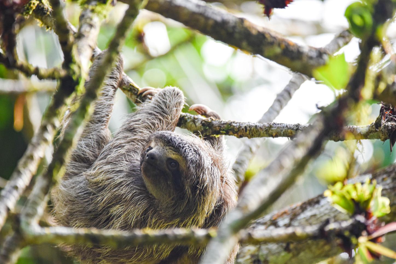 sloth-bocas-del-toro-panama-writer-photo