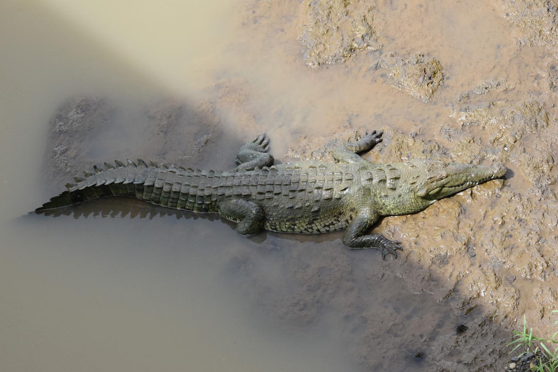 costa-rica-wildlife-conservation-writer-photographer-freelance-blogger-content