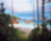 Driftwood, Beach, Calvert Island, Hakai