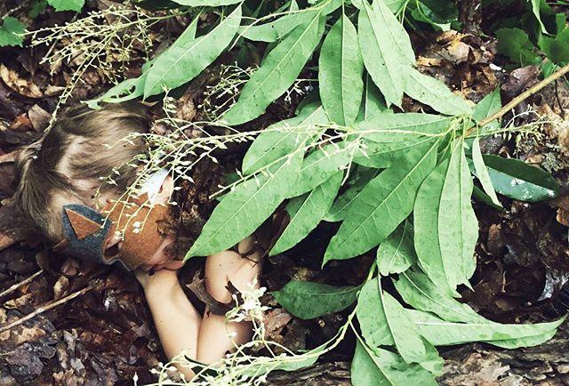 Can you spy the sneaky little fox_____#wildchild #camouflage #grayfox #rewildingchildhood #wildlings