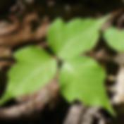 Screen Shot 2020-04-11 at 12.15.04 PM.pn