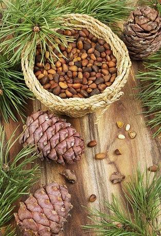 pine-nuts-copy.jpg