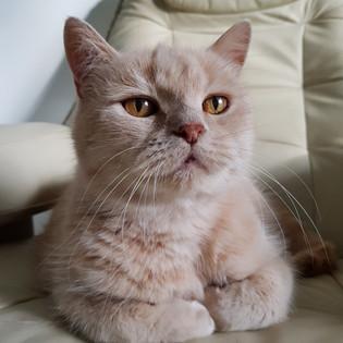 Pet Sitting 8.jpg