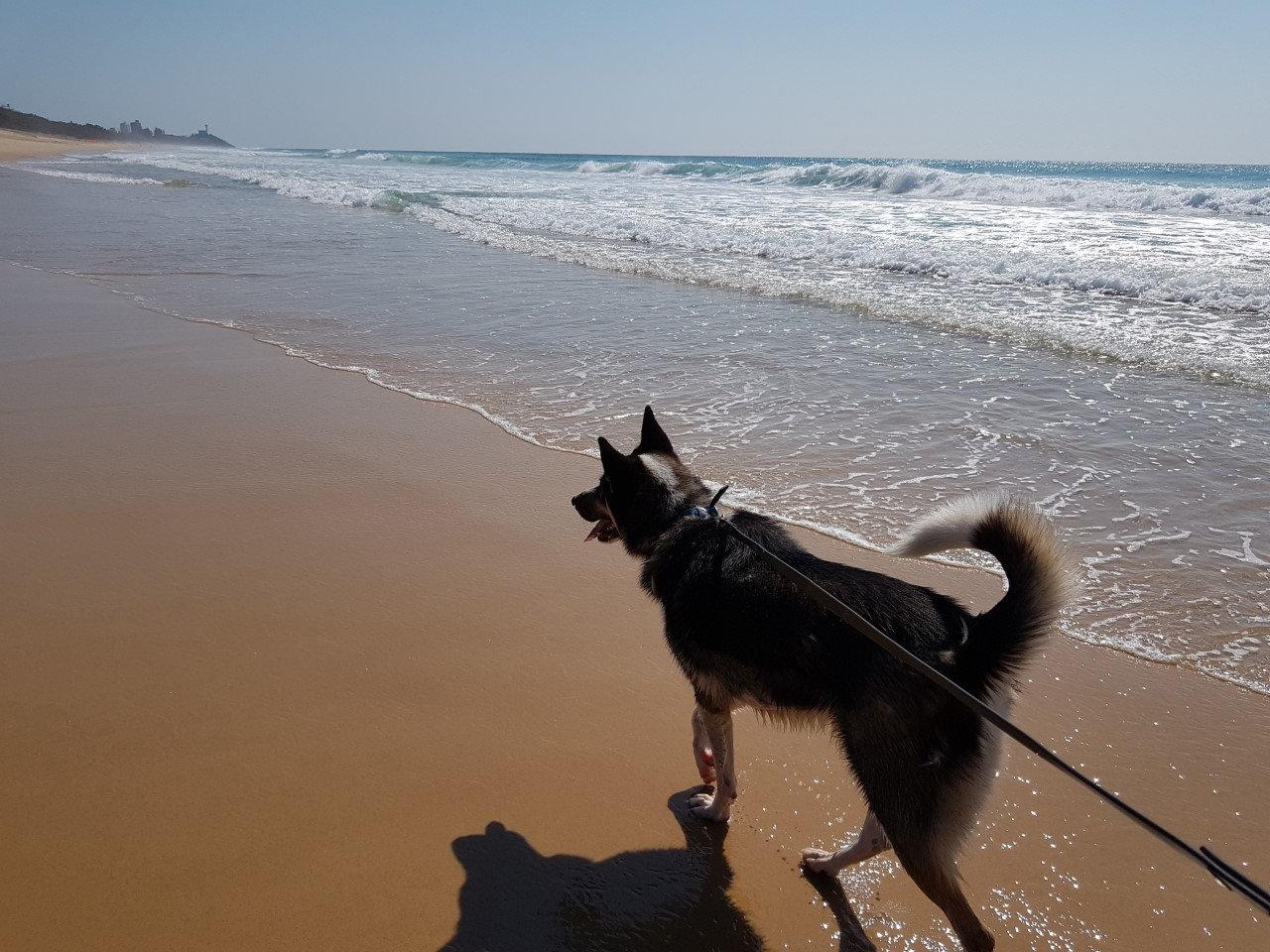 30min Dog Walk