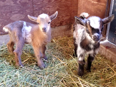 Our newest boys are getting ready for their new home!