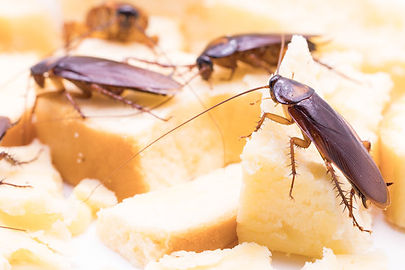 canva-cockroach-on-a-slice-of-bread-MAC5
