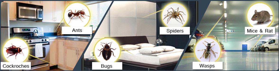 Pest_Control.jpg