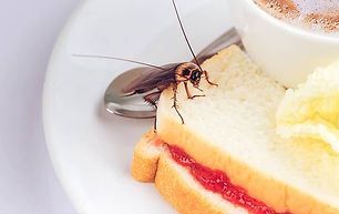 cockroaches-love-easy-access-to-food.jpg