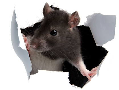 Rodent Control.png