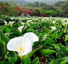 05陽明山竹子湖.jpg