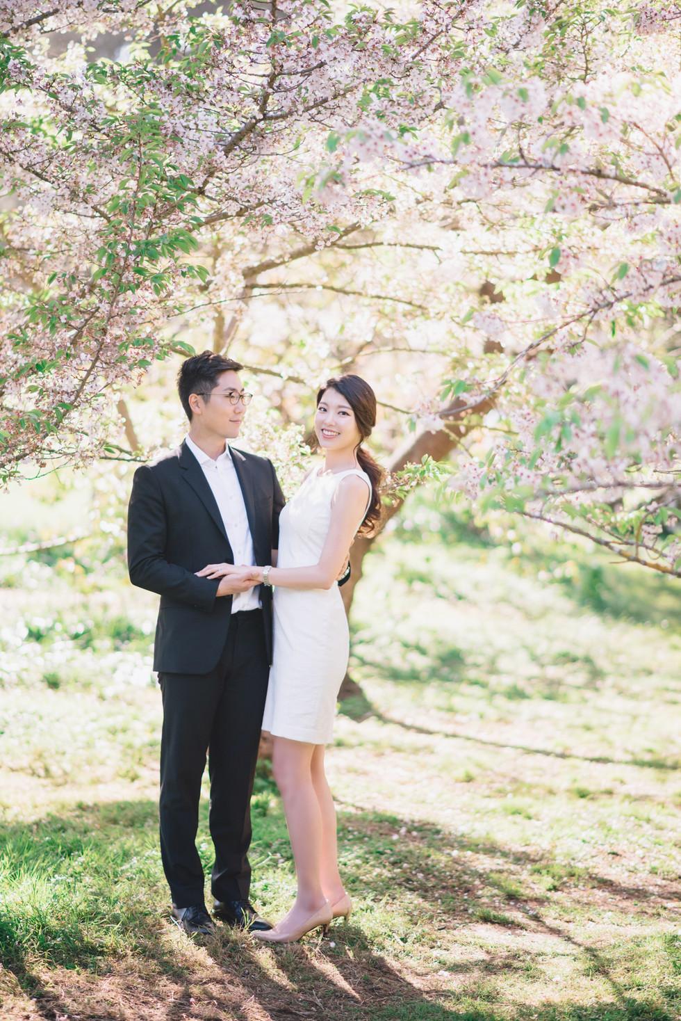 Cherry Blossom Ending
