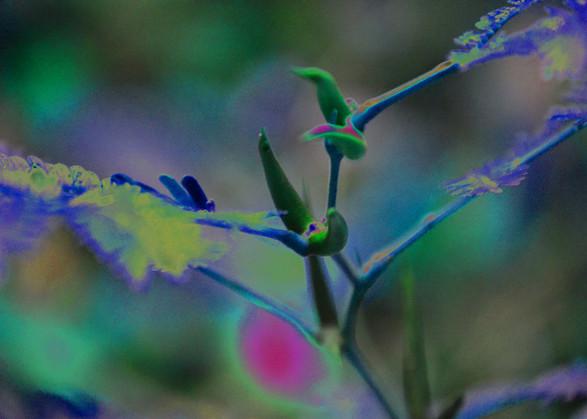 Antidote Thorn