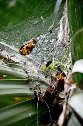 Wet Web 9