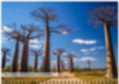 Pic_gallery_trees_2.jpg