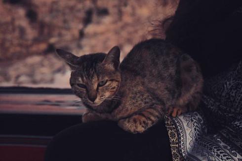 Samia's Borrowed Cat