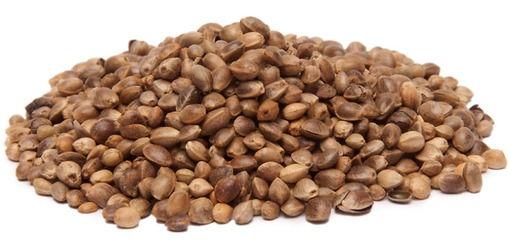 Seeds.jpg
