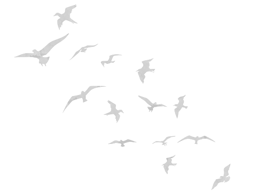 birdslight.png
