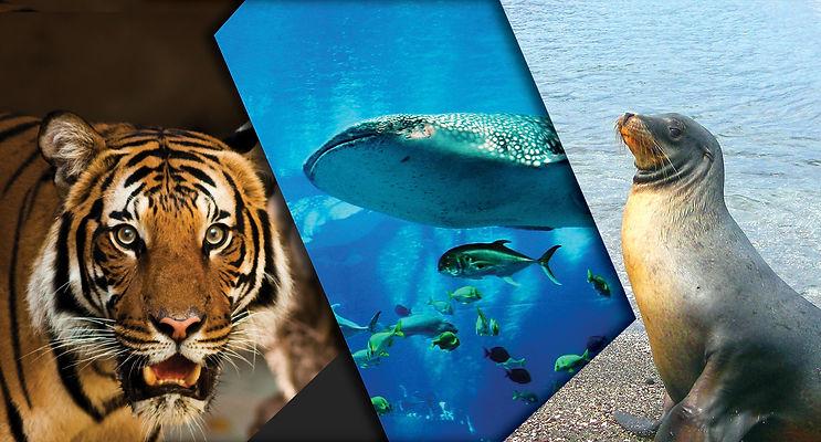 animalwelfare3.jpg