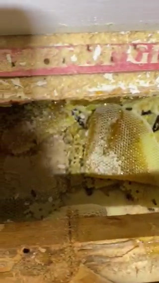 Honeycombs in Flooring