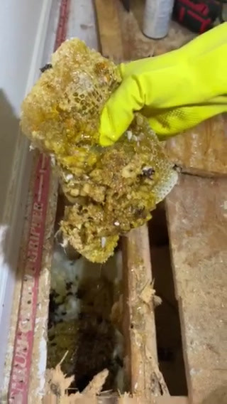 Dripping Honeycombs with Bees