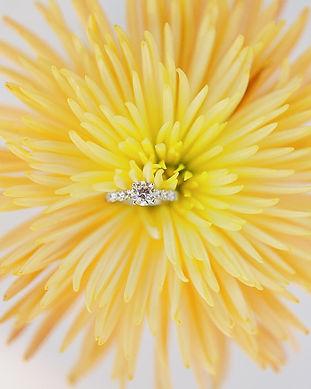 Dazzling-Star-Signature-Diamond-Collection-with-Macys-09.jpg